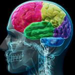 可能性は無限大!知られざる「脳」の不思議